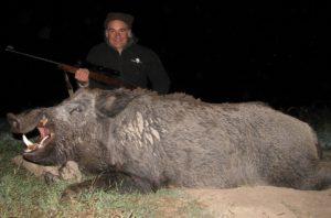 Boar Hunts Argentina