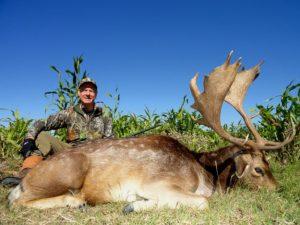 Hunting Fallow Deer Argentina