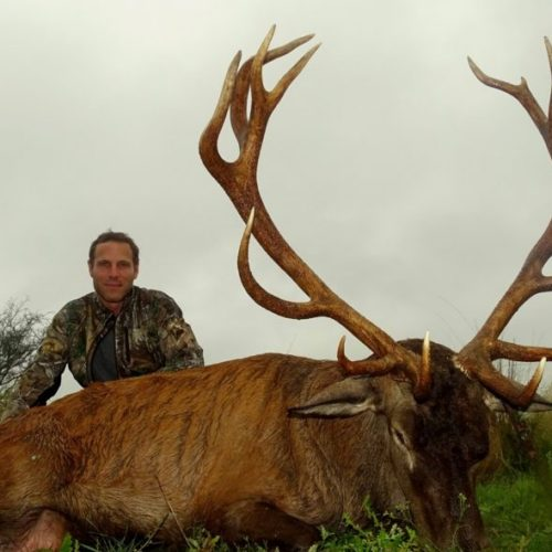 Free Range Red Stag