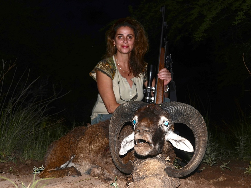 Mouflon Hunting in Argentina