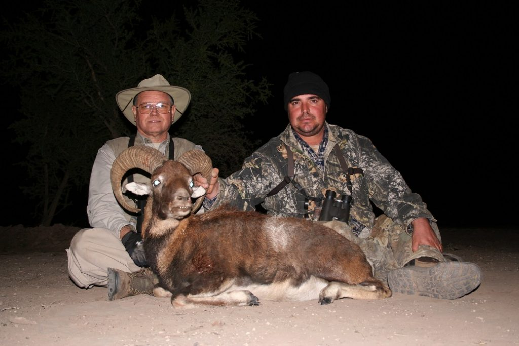 Hunting Mouflon Argentina