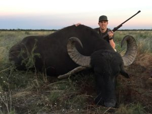 Water Buffalo Hunts Argentina