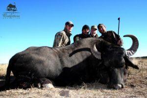 Hunting Water Buffalo Argentina